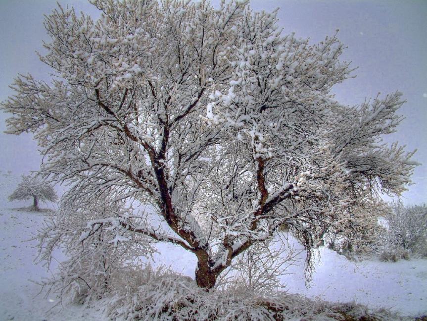 Winterlandschaft von MarkusRam/Flickr